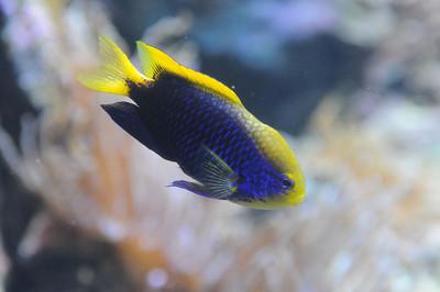 2011_Sydney_Aquarium_0018