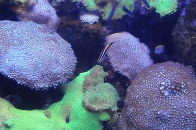 2011_Sydney_Aquarium_0011