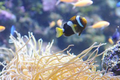 2011_Sydney_Aquarium_0021