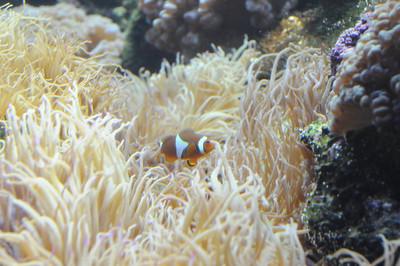 2011_Sydney_Aquarium_0028