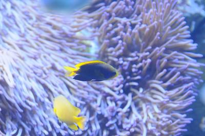 2011_Sydney_Aquarium_0017