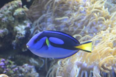 2011_Sydney_Aquarium_0022