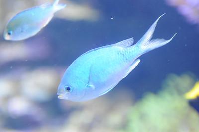 2011_Sydney_Aquarium_0015