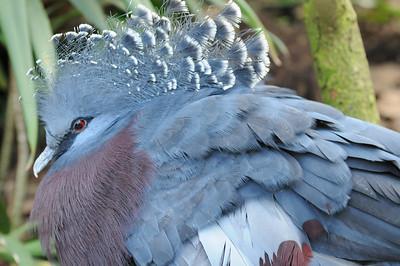 2011_Taronga_Zoo_Australia_0029