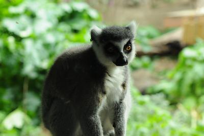 2011_Taronga_Zoo_Australia_0006