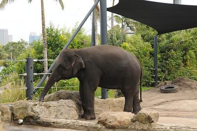 2011_Taronga_Zoo_Australia_0003