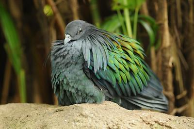 2011_Taronga_Zoo_Australia_0016