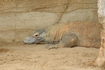 2011_Taronga_Zoo_Australia_0026