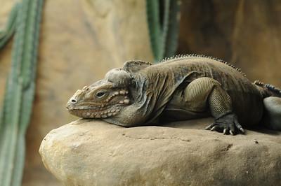 2011_Taronga_Zoo_Australia_0027