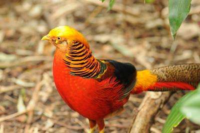 2011_Taronga_Zoo_Australia_0017
