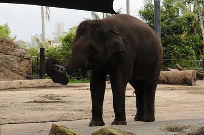 2011_Taronga_Zoo_Australia_0012