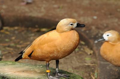 2011_Taronga_Zoo_Australia_0022