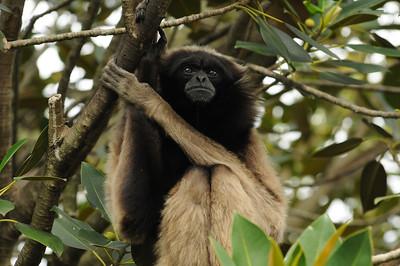 2011_Taronga_Zoo_Australia_0007