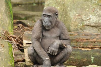2011_Taronga_Zoo_Australia_0005