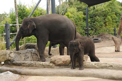 2011_Taronga_Zoo_Australia_0004