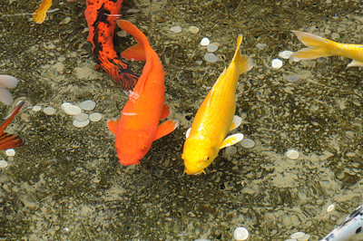 2011_Taronga_Zoo_Australia_0023
