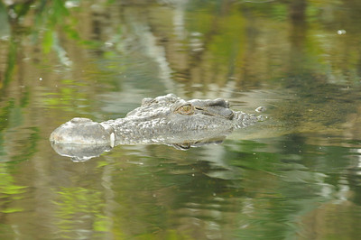 2011_Taronga_Zoo_Australia_0009