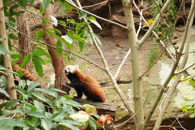 2011_Taronga_Zoo_Australia_0002