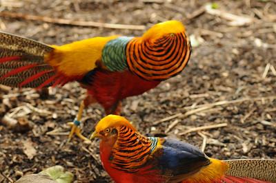 2011_Taronga_Zoo_Australia_0013