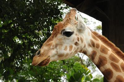 2011_Taronga_Zoo_Australia_0025