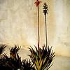 A flower in Ojai