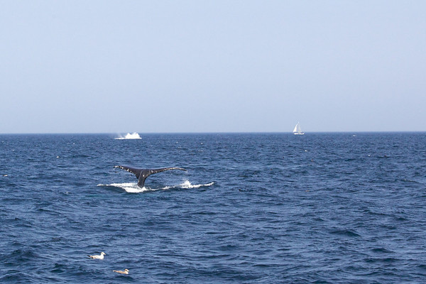 2011 Whale Watching
