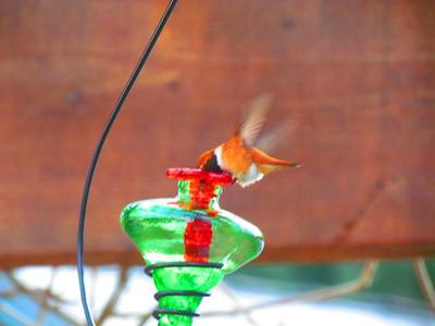 2011 hummingbirds