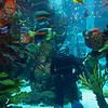 01-03 Golden Nugget Aquarium @ Las Vegas, NV