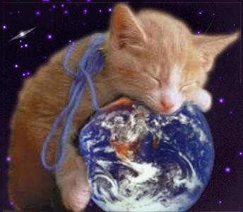 KittenyLovefortheworld desktop