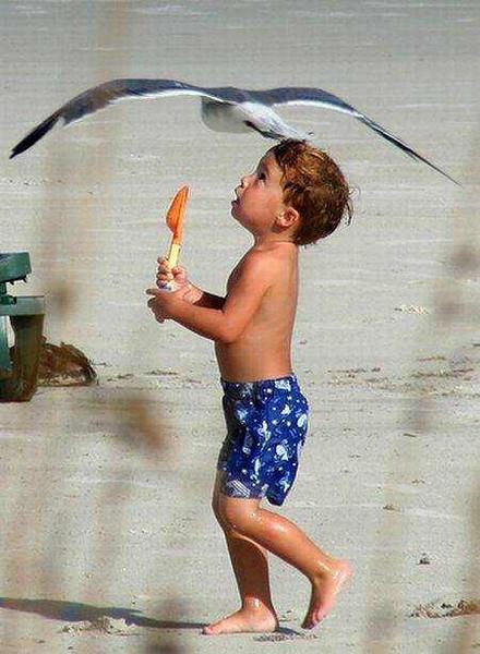 kid gull