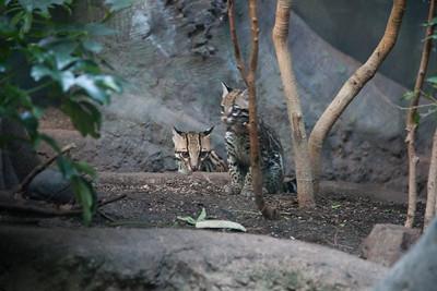 2011_05_01 Woodland Park Zoo