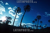 Nationalpark El Palmar > Yatay - Palmen / national park el palmar / parque nacional el palmar © Patrick Lüthy/LATINPHOTO.org