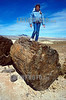 Argentinien : Versteinerter Wald > Jaramillo > Baum / fossilised wood > tree / bosque fosilizado > bosque petrificado © German Falke/LATINPHOTO.org