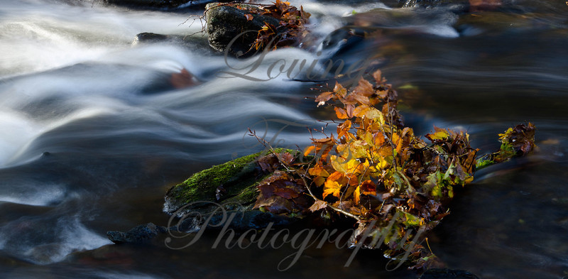 """""""Dawn Light on the River"""" -- Here is a shot that is an example of some of the new things I have been practicing this year with master photographer, Hiro Sugimura. Shooting on tripod with 70-200 2.8 -- slow speed to create water flow -- early light hitting fall follage dropped in the river."""