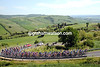 The peloton starts to fragment in the Tuscany hills...