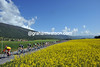 Yellow is the colour of the day as Cadel Evans passes springtime flowers behind his BMC team...