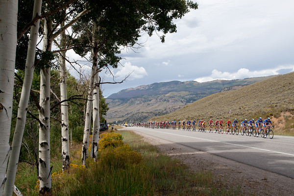 The peloton now is stringing out again as they pass some aspen trees.