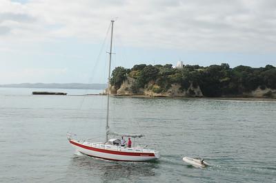 2011_New_Zealand_Waiheki_Island0004