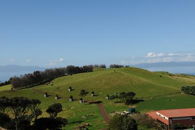 2011_New_Zealand_Waiheki_Island0016