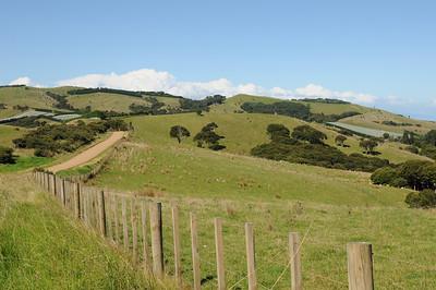 2011_New_Zealand_Waiheki_Island0008