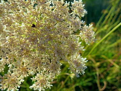 2012-07-29 Fawn Hill plants