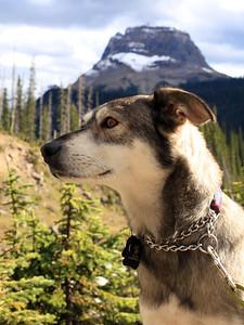 Jasper on the lookout