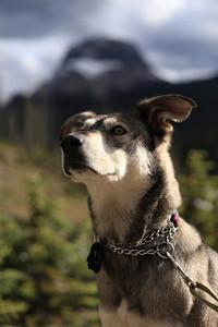 Jasper enjoying the mountains