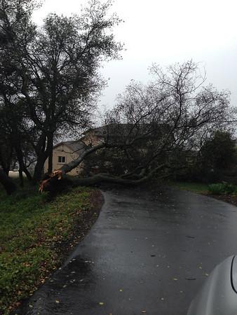 2012-12-21 Fallen tree across the driveway