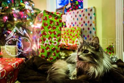 Christmas Kitty  December 25, 2012