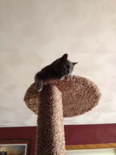 Gerald immediately claimed the tree as his own. Here he is on the top branch feeling like he is the King of the World.
