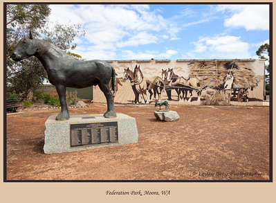 16/366  Bronze statue of a drought horse and kelpie in front of a mural depicting the district's agricultural heritage in Federation Park, Moora, Western Australia. The statues and mural are a lasting memorial to the animals that were essential in opening up the area in the early years.  Photographed January 2012 - © Lesley Bray Photography - All Rights Reserved.