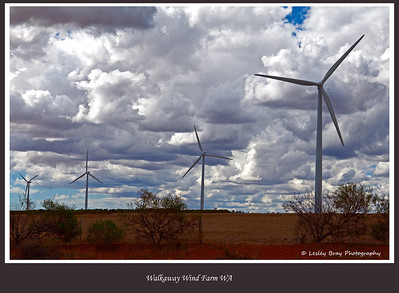 19/366 Turbines at a wind farm at Walkaway, Western Australia. Walkaway Wind Farm is the largest in Western Australia and the second largest in Australia.  Photographed January 2012 - © Lesley Bray Photography - All Rights Reserved.