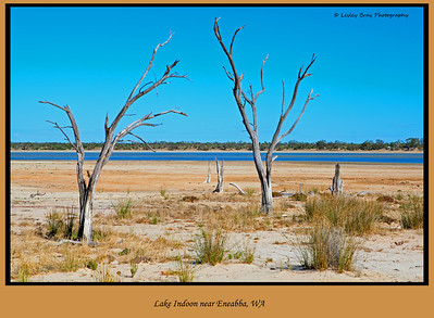 13/366  Lake Indoon near Eneabba, in Western Australia. We were able to drive all the way round the lake.  Photographed January 2012 - © Lesley Bray Photography - All Rights Reserved.