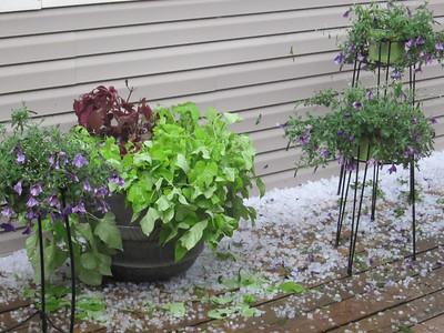 2012 HAIL IN MAY!